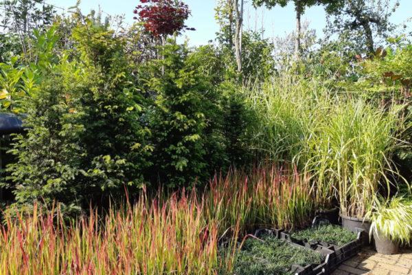 assortiment planten